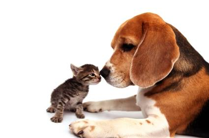 pet_friendship_dog_and_cat